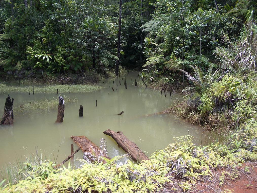 fiji_feejee_exp_jungle_swamp.jpg