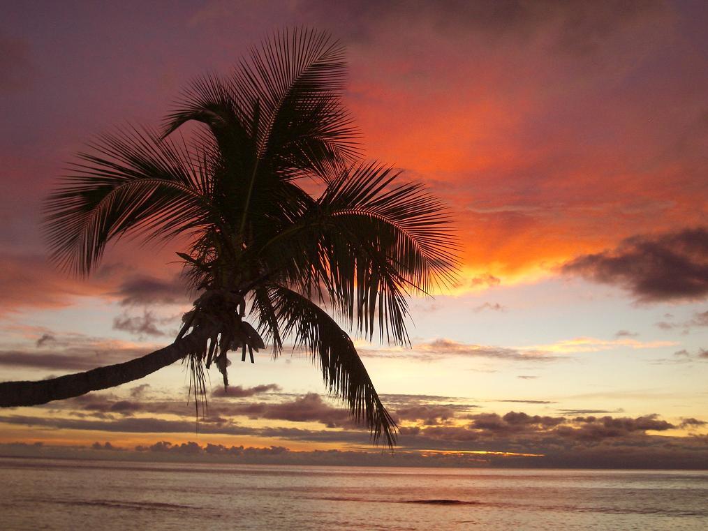 fiji_octopus_sunset.jpg