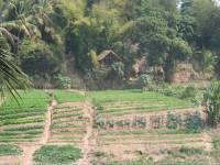 laos_langprobang_farm.jpg