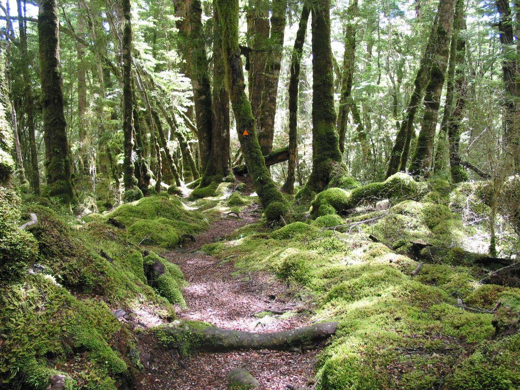 nz_manapouri_trail.jpg