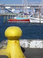 nz_wellington_sailboats_tb.jpg